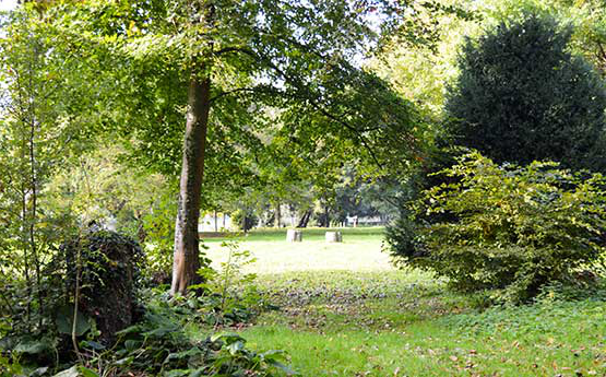 Trees on Singleton Park Campus Grounds - South